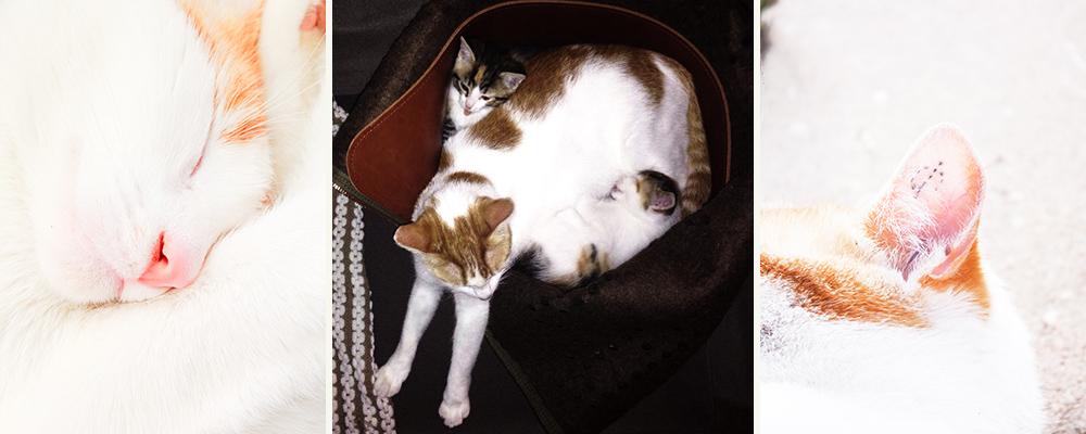 Cat bag experience