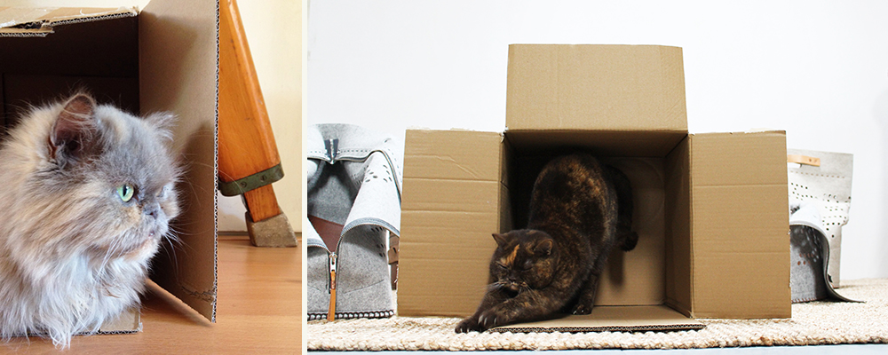 Cardboard-catt